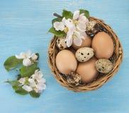 Яичка цыпленка и триперсток в цветках корзины и весны на сини Стоковые Фотографии RF