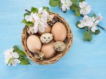 Яичка цыпленка и триперсток в цветках корзины и весны Стоковые Фото