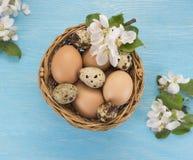Яичка цыпленка и триперсток в цветках корзины и весны Стоковое Изображение