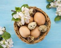 Яичка цыпленка и триперсток в цветках корзины и весны Стоковая Фотография