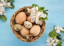 Яичка цыпленка и триперсток в цветках корзины и весны Стоковые Изображения RF