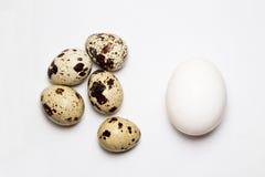 Яичка цыпленка и триперсток Стоковое Изображение RF