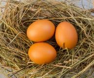 Яичка цыпленка Стоковые Фотографии RF