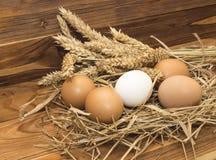 Яичка цыпленка стоковое изображение rf
