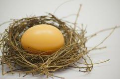 Яичко в гнезде птицы Стоковые Фото
