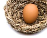 Яичко в гнезде Стоковое Изображение RF
