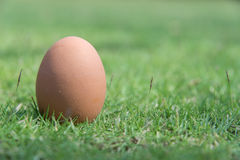 Яичко в зеленой траве Стоковое Изображение RF