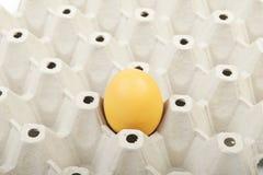 Яичко в картонной коробке Стоковое Фото