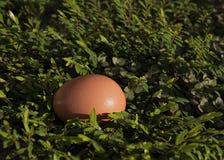 Яичко в поле листьев Стоковые Фото