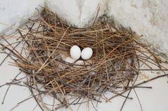 Яичко голубя на гнезде Стоковые Фото