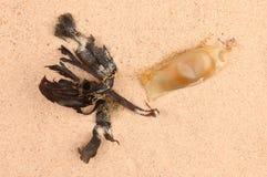 Яичко и морская водоросль рыб Стоковые Изображения RF