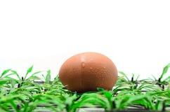 Яичко на пластичной траве Стоковая Фотография RF