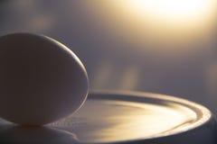 Яичко на плите Стоковое фото RF