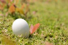 Яичко на траве концепции пасхи Стоковое Изображение