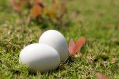 Яичко на траве концепции пасхи Стоковое Изображение RF