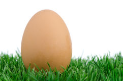 Яичко на траве Стоковое Изображение RF