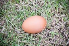 Яичко на траве Стоковая Фотография RF
