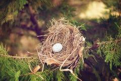 Яичко птицы в гнезде стоковые изображения
