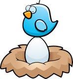 яичко птицы Стоковые Изображения