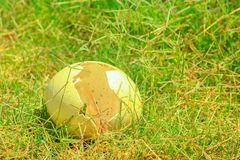 Яичко страуса на траве Стоковые Изображения