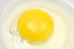 яичко сырцовое Стоковые Изображения