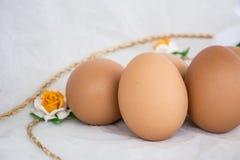 яичко сырцовое Стоковое Фото