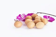 Яичко с цветками стоковое фото rf