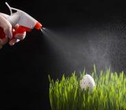 Яичко триперсток пасхи на зеленой траве Стоковые Фото