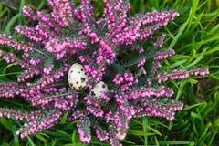 Яичко триперсток с экзотическим розовым цветком Стоковое Изображение RF