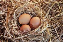 Яичко цыпленка на гнезде соломы Стоковые Изображения RF