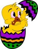 яичко цыпленка Стоковое Изображение