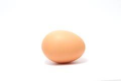 Яичко цыпленка Стоковые Фотографии RF