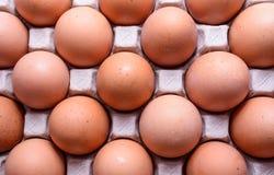 Яичко цыпленка Стоковая Фотография RF