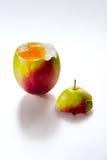 Яичко любит яблоко на белой предпосылке Стоковое Изображение