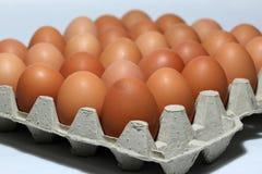 Яичко Chicken's положило выровнянную перспективу в бумажный поднос яичка Стоковое фото RF