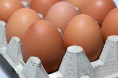 Яичко Chicken's положило выровнянную перспективу в бумажный поднос яичка Стоковые Фото