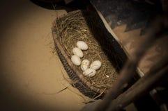 Яйца гусыни в ринве соломы стоковая фотография rf