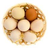 Яйца на белом цыпленке соломы предпосылки стоковое фото rf