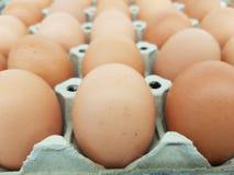 Яйца сырье используемое в варить и ингредиенты торта Добавьте протеин к телу стоковая фотография