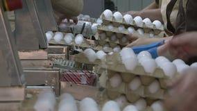 Яйца цыпленка на птицеферме ферма, индустрия видеоматериал