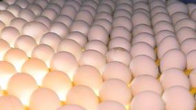 Яйца цыпленка на птицеферме ферма, индустрия акции видеоматериалы