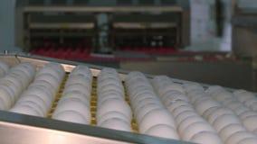 Яйца цыпленка на птицеферме ферма, индустрия сток-видео