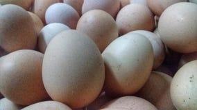 Яйца цыпленка яйца стоковая фотография
