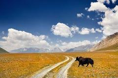 Яки в долине горы стоковое изображение