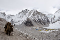 Яки - Непал стоковое фото rf