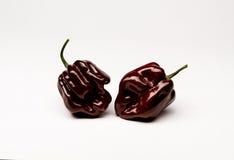 Ямайский горячий шоколад - горячие перцы Стоковые Фото