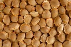 Ямы высушенного абрикоса на деревянной разделочной доске еда предпосылки здоровая Стоковые Изображения
