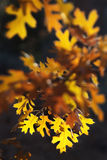 янтарная осень Стоковые Фото