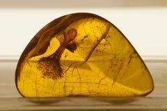 янтарное включение Стоковое Изображение