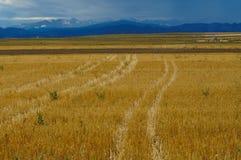 Янтарные поля зерна Стоковые Фотографии RF